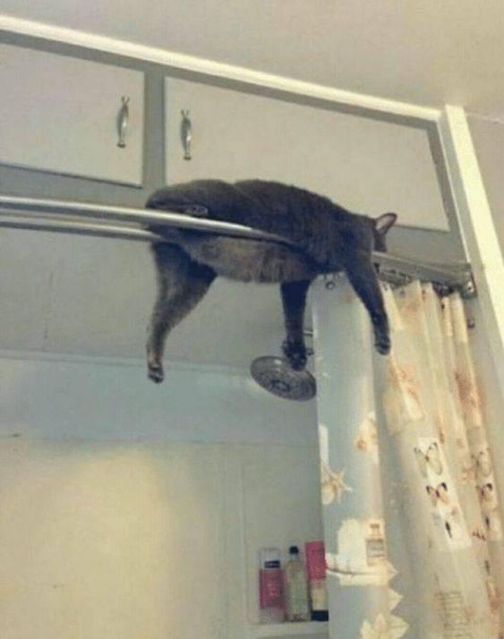 Koty potrafią zasnąć wszędzie i w każdej pozycji. Zdjęcia sprawiają, że nie możemy przestać się śmiać.