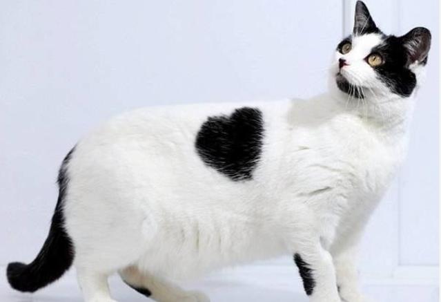 Ten kotek ma szczególnie uroczą łatkę. Widzicie ją?
