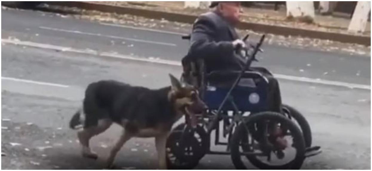 Pies pomaga swojemu panu pchać wózek. Czworonóg jest jedynym przyjacielem 70-latka