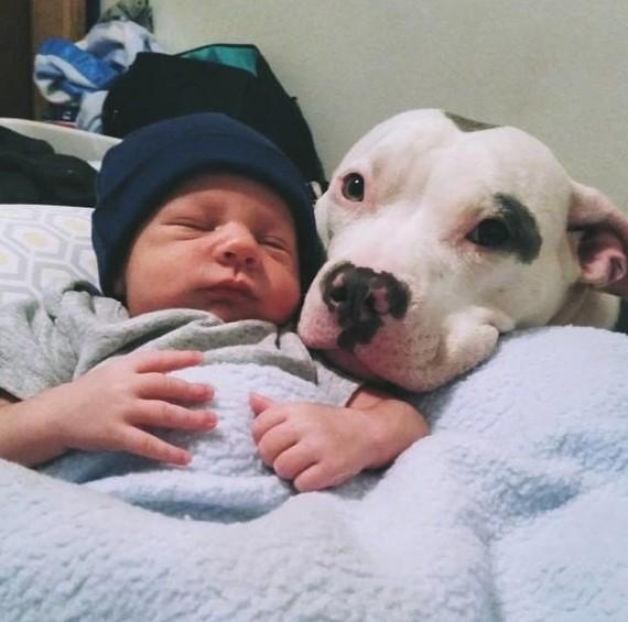 Nie posłuchała ostrzeżeń i zostawiła pitbulla samego z noworodkiem. Kiedy wróciła natychmiast chwyciła za telefon