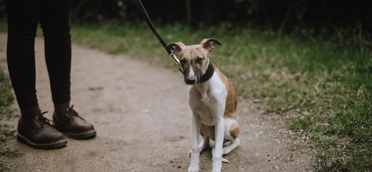 Niewiele osób wie, że trzeba płacić podatek od psa. Są jednak grupy, które mogą uniknąć opłat