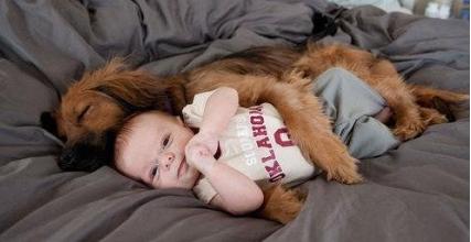Pies chroni swojego małego właściciela. Z takim przyjacielem można czuć się bezpiecznie