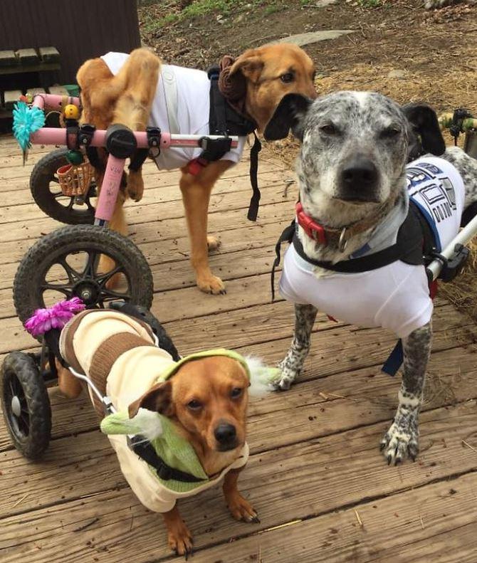 Psy potrzebowały opieki.