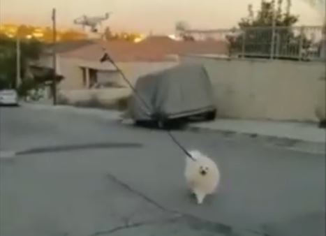 Bezbłędny sposób na wyprowadzanie psa podczas kwarantanny. Właściciela zastąpił dron