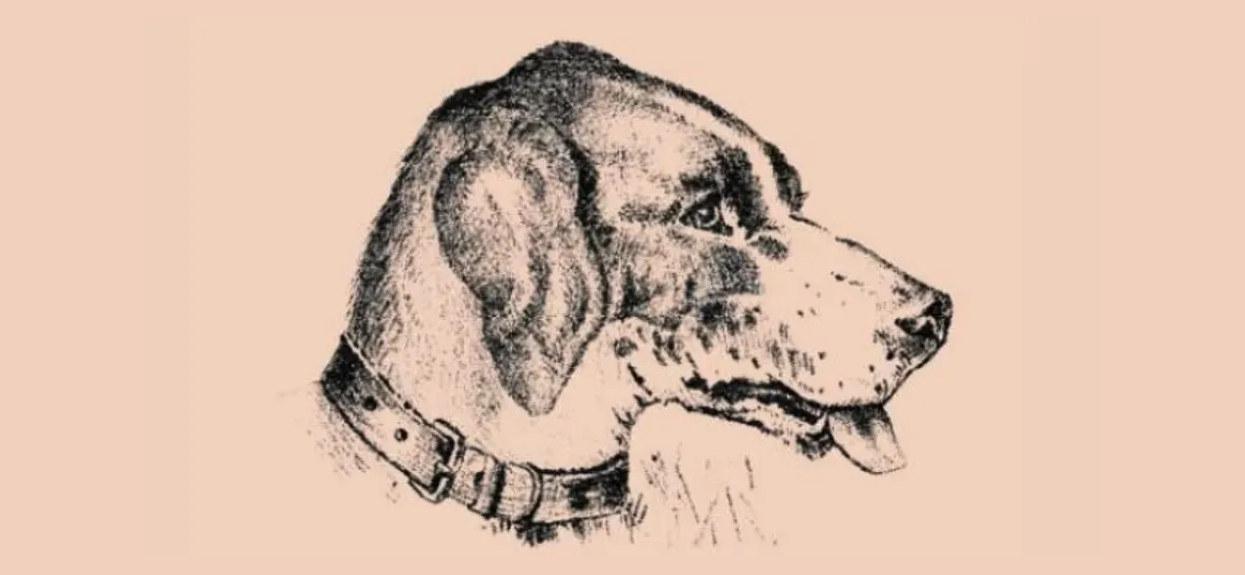Tylko 1% internautów widzi na obrazku więcej niż psa. Sprawdź, czy należysz do grona największych bystrzaków