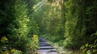 Mężczyzna poszedł do lasu, zastał widok, który będzie go nawiedzał do końca życia. Wielka tragedia w polskiej wsi