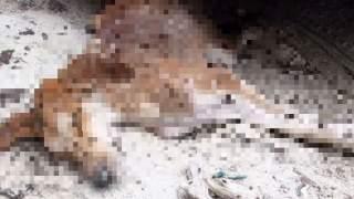 Porzucony pies leżał w krytycznym stanie na ulicy, nie miał żadnych szans. Gdy przechodzeń zabrał go do lekarza stało się niewyobrażalne
