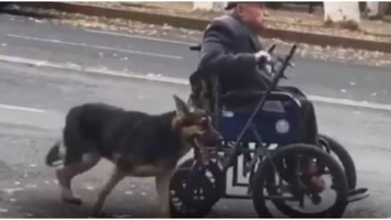 Niepełnosprawność bez tego psa byłaby trudniejsza.