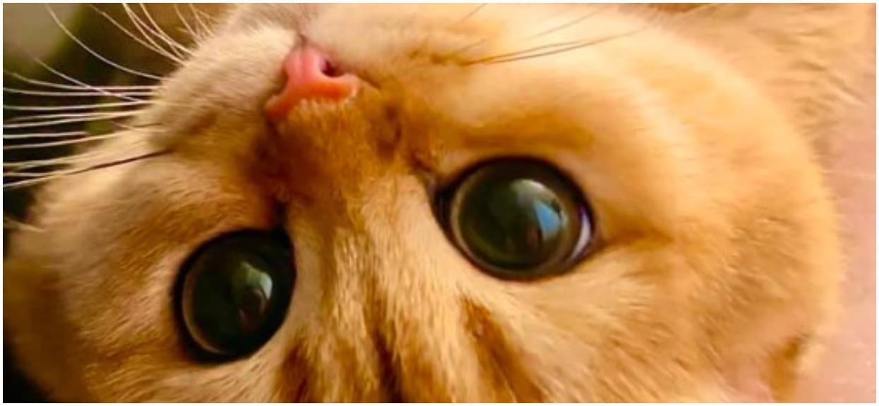 """Kotek mówi wszystkim serdeczne """"Dzień dobry"""""""