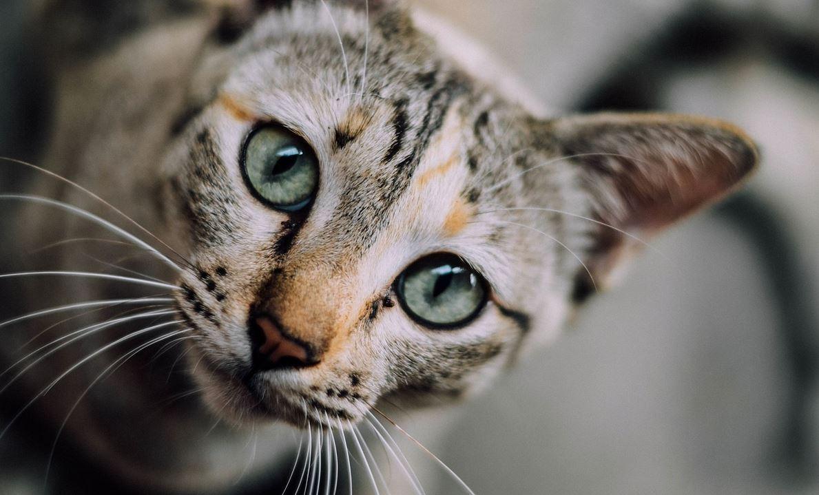 Z powodu kwarantanny zostawił kota samego na półtora miesiąca. Gdy wszedł do domu niemal ścięło go z nóg, finał historii powala