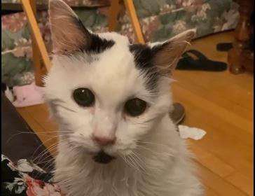 Wrzuciła do sieci nagranie, pokazuje, co zrobiła z 29-letnim kotem. Treść filmiku odbiera mowę, ciężko w to uwierzyć