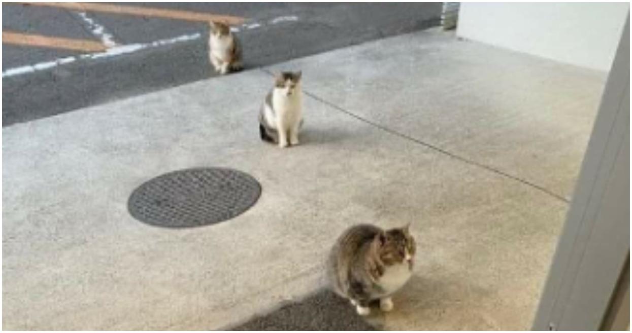 Kotki zachowują bezpieczny odstęp. Bierzmy z nich przykład