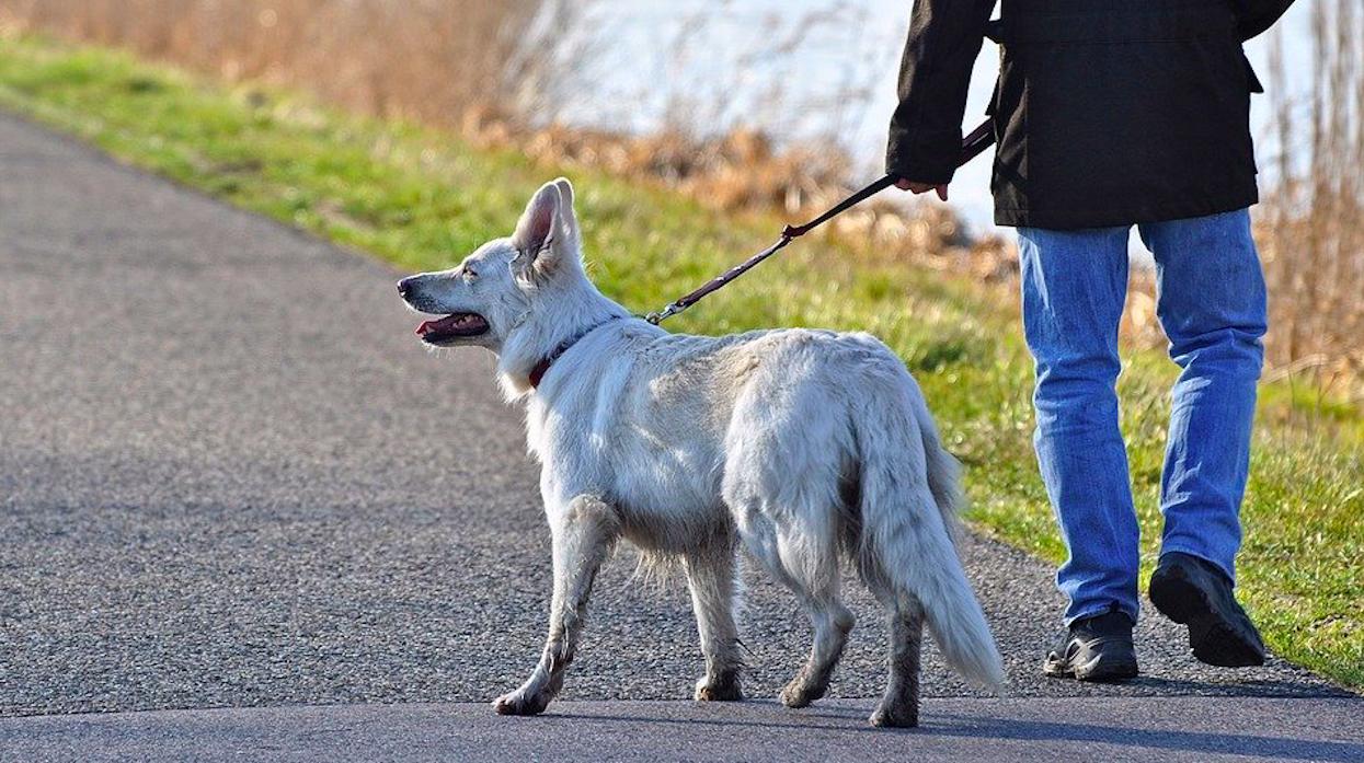 Wychodzisz z psem na spacer? Po powrocie trzeba pamiętać o ważnej rzeczy