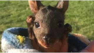 Kotki i pieski ciągle dostają serduszka, a co z małym kangurkiem?