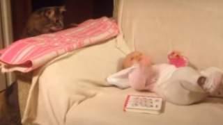 Zaginięcie jego kota było dopiero początkiem. Gdy go odnalazł, niesamowita prawda wyszła na jaw, wszystko widać na jednym zdjęciu