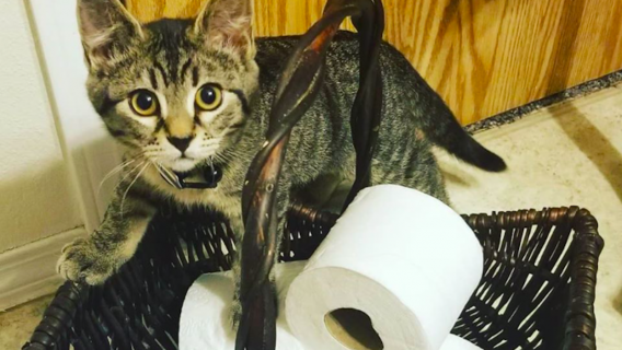 Kociak przeżyłchwile grozy