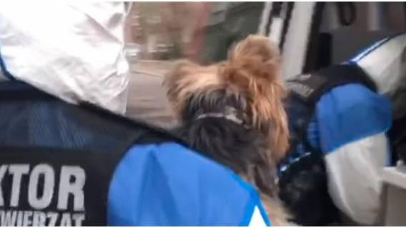 Nastolatek męczył psa