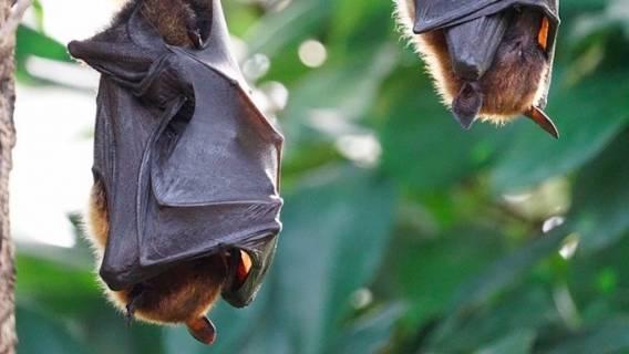 Zwierzęta są nosicielami wielu koronawirusów