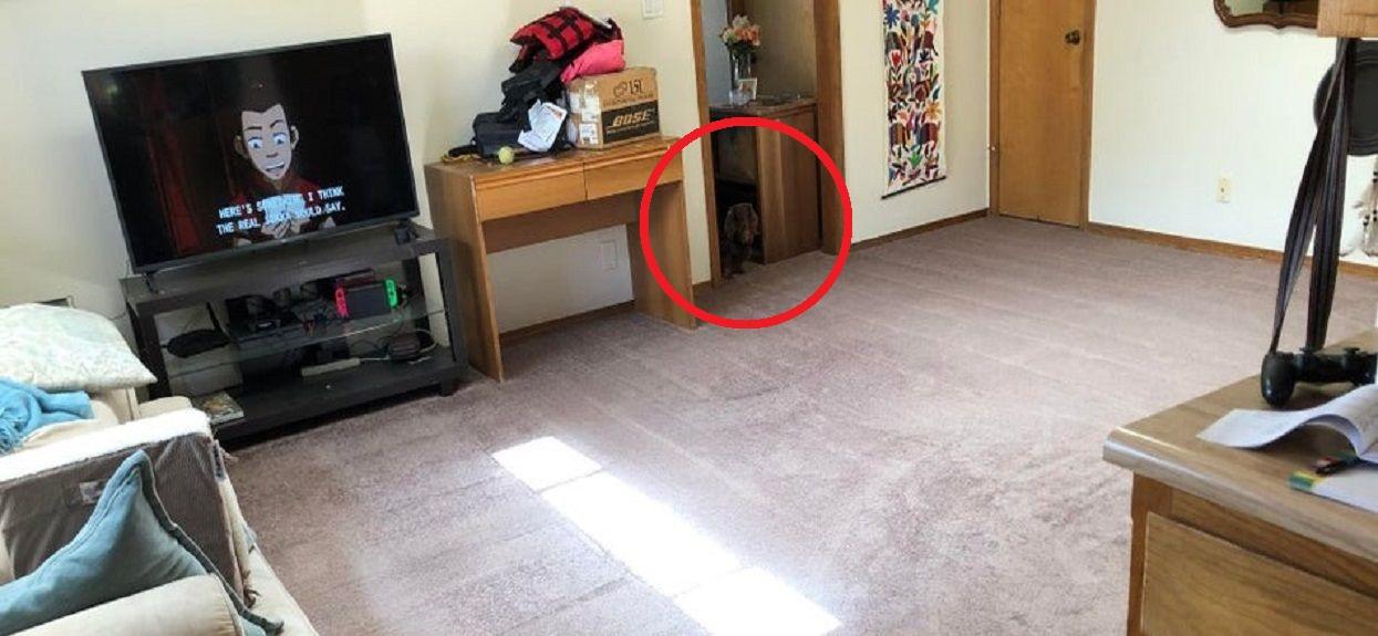 Pies ukryty na zdjęciu rozwiązanie