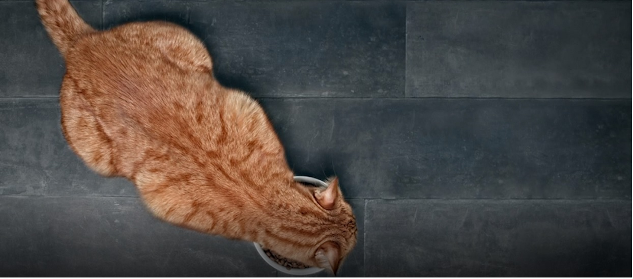Kobieta dokarmiała bezdomnego kota. Zwierzak odwdzięczył się w niebywały sposób