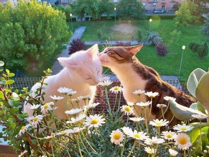 Kotki dają sobie buziaczki i relaksują się wśród kwiatów. Nie ma to jak ukwiecony balkon