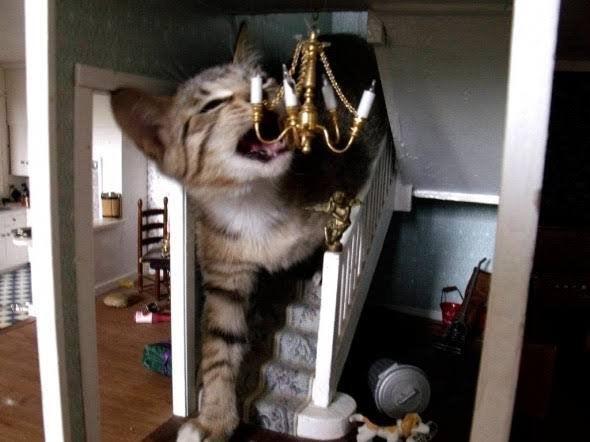 Kotek włamał się do domku dla lalek, nie sposób się nie uśmiechnąć