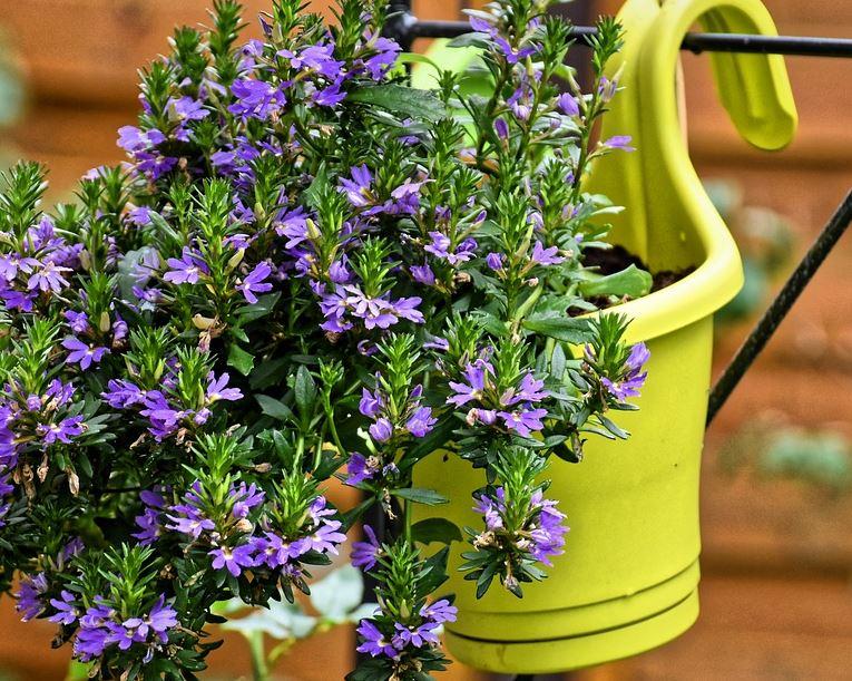Rośliny doniczkowe - domowe triki