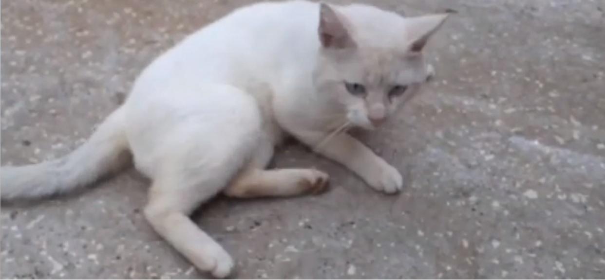 Bezdomny kot podszedł do niepełnosprawnej dziewczynki. Zaraz potem stała się niezwykła rzecz