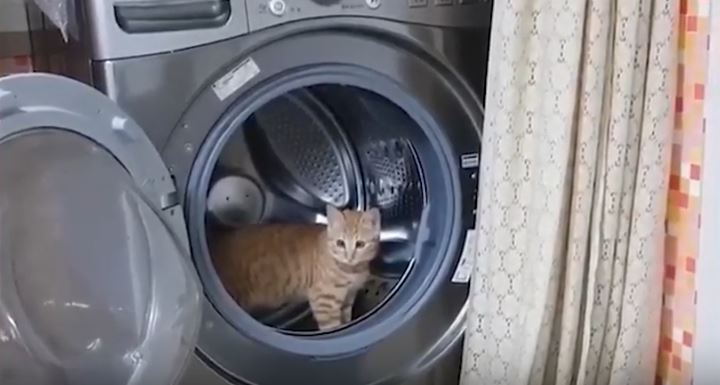 Kot wszedł do pralki, ale nikt nie mógł przewidzieć, co zrobi w środku. Właściciele od razu wyciągnęli telefon