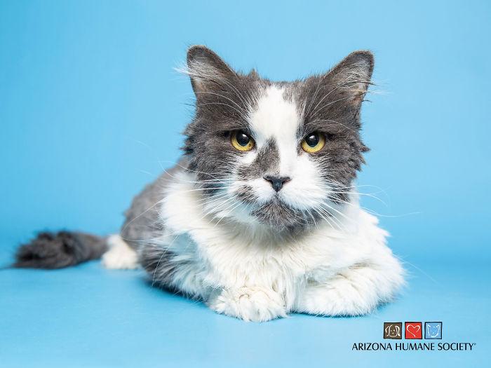 Kot nagle zachorował. Gdy weterynarz zajrzał do jego brzucha, nie mógł uwierzyć, ludzka głupota nie zna granic