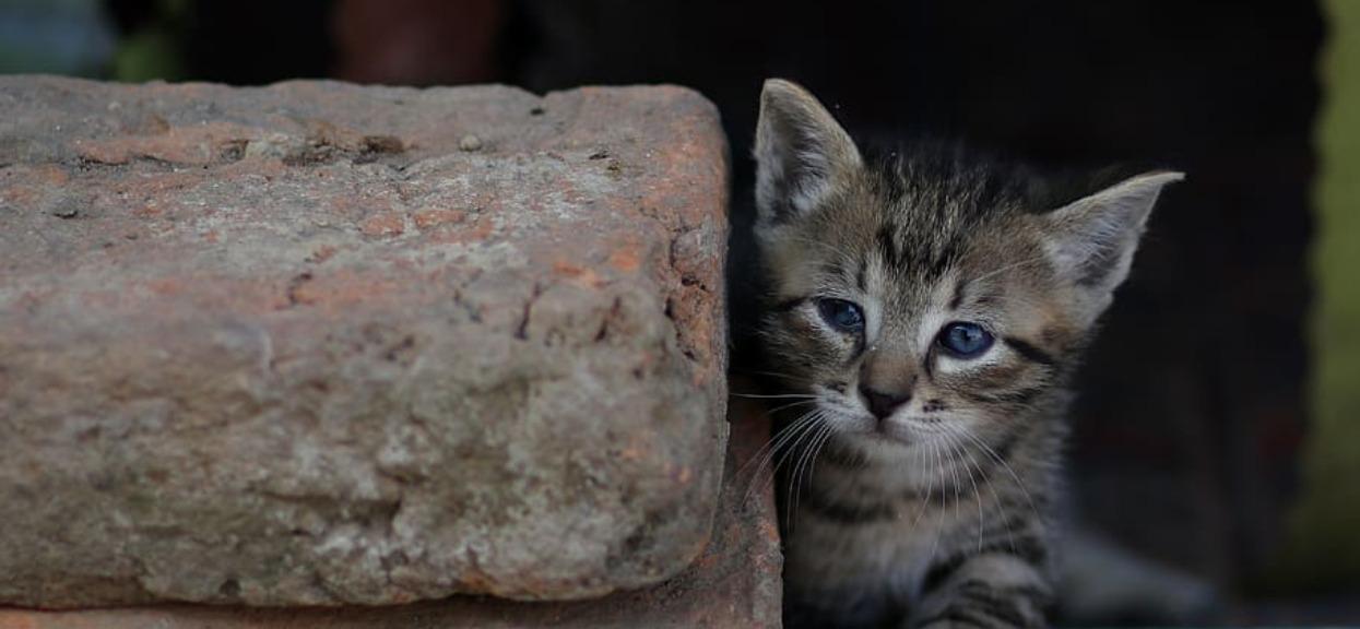 Kotek podszedł do niej podczas najbardziej ulewnego deszczu, tak uratował życie. Poruszające wideo łapie za serce