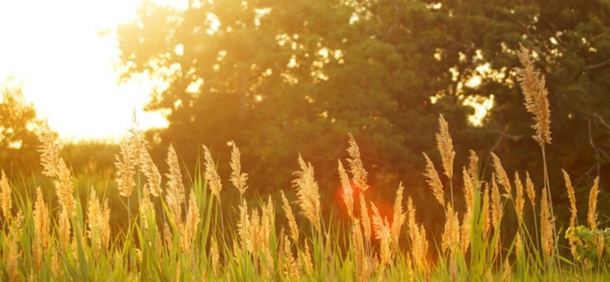 Synoptycy pokazali niepokojące prognozy na lato 2020. Część Polaków będzie rozpaczać