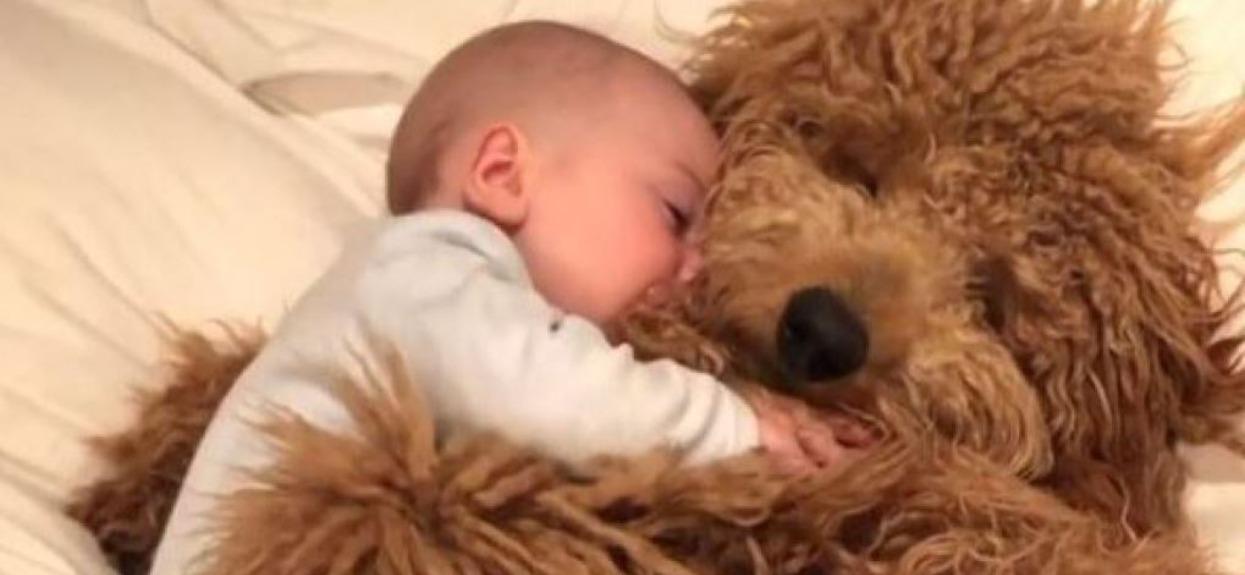 Słodki maluch i jego pies smacznie śpią, a Wy wstaliście już?