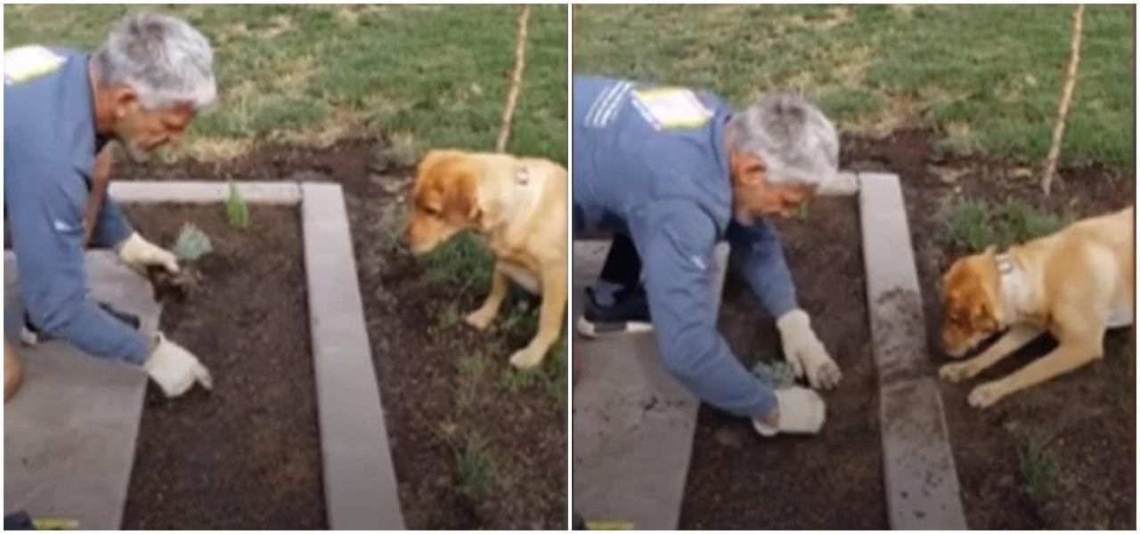 Mężczyzna sadził kwiaty w ogrodzie. Podszedł do niego pies i nagle zrobił niebywałą rzecz. Nagranie rozkłada na łopatki