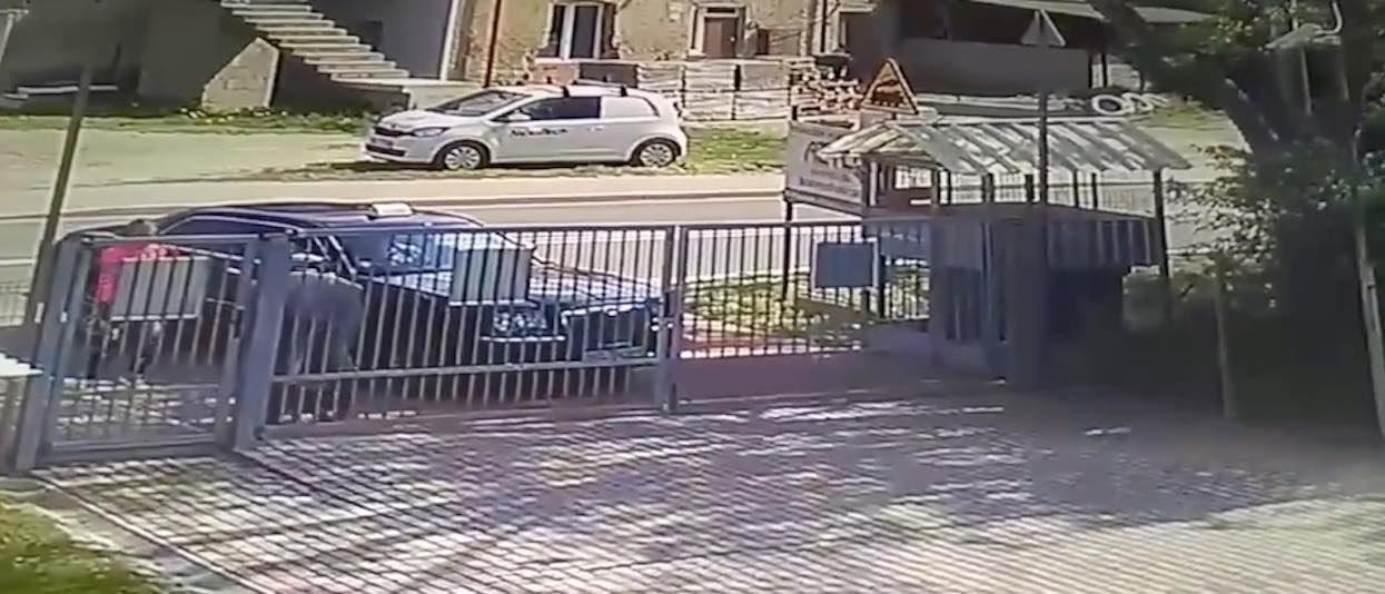 Pies miał demolować ich dom, nie mieli żadnych skrupułów, postanowili się go pozbyć. Szybko pożałowali, ale było już za późno