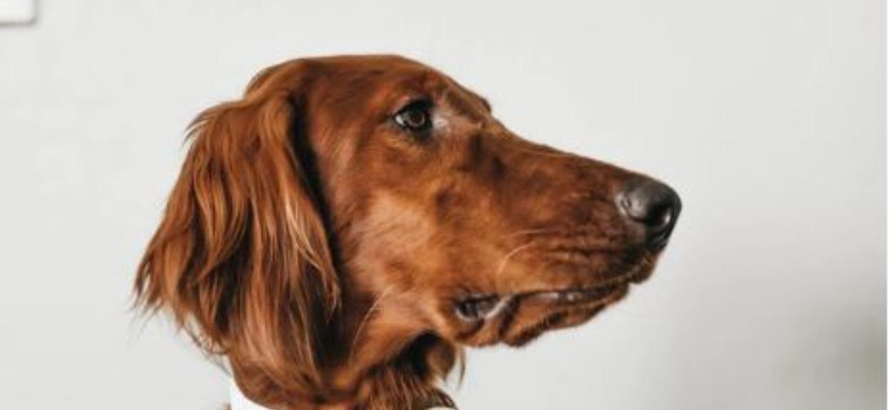 Pies umierał na tylnim siedzeniu, gdy ona stała w korku. Nagle do samochodu podbiegł nieznajomy, jedna rzecz zaważyła o losach czworonoga