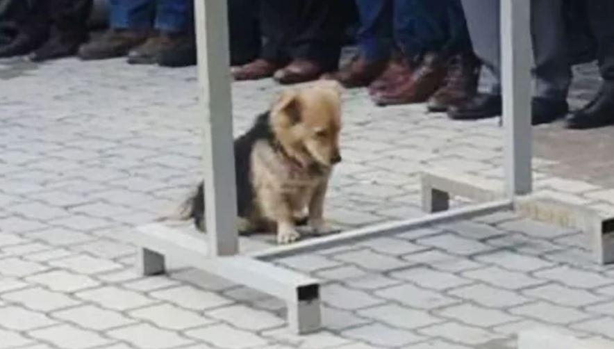 Pies przyszedł na pogrzeb swojego pana. Chwilę później wydarzyła się niesamowita rzecz, żałobnicy nie wierzyli własnym oczom