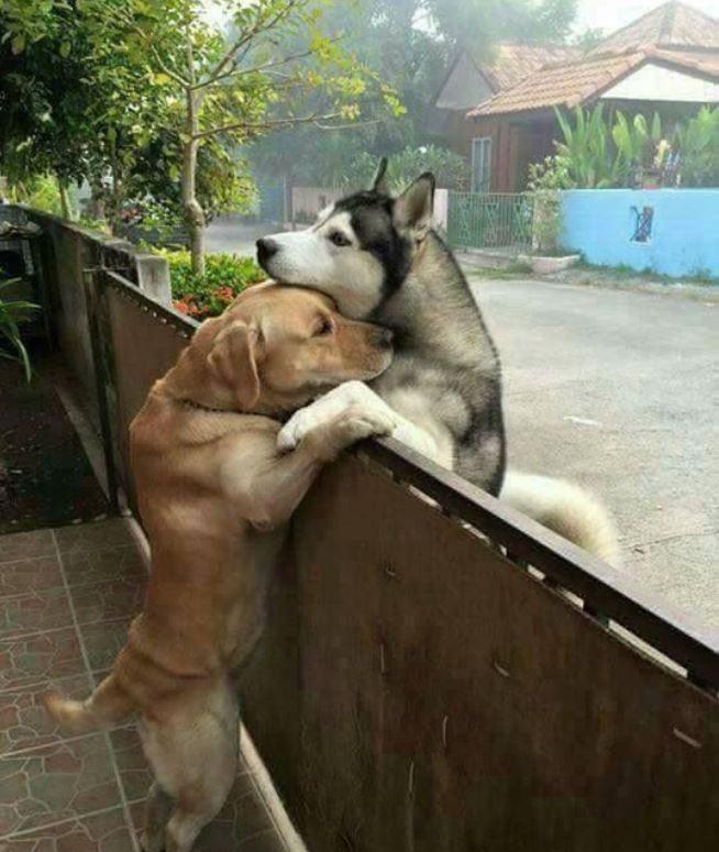 Przyjaźń pokona każdą przeszkodę