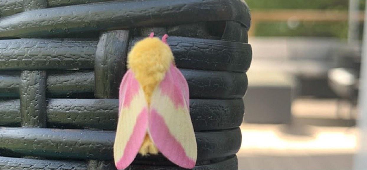 Myślała, że widzi pięknego motyla, ale się myliła. Prawda okazała się zupełnie inna, od razu sięgnęła po telefon
