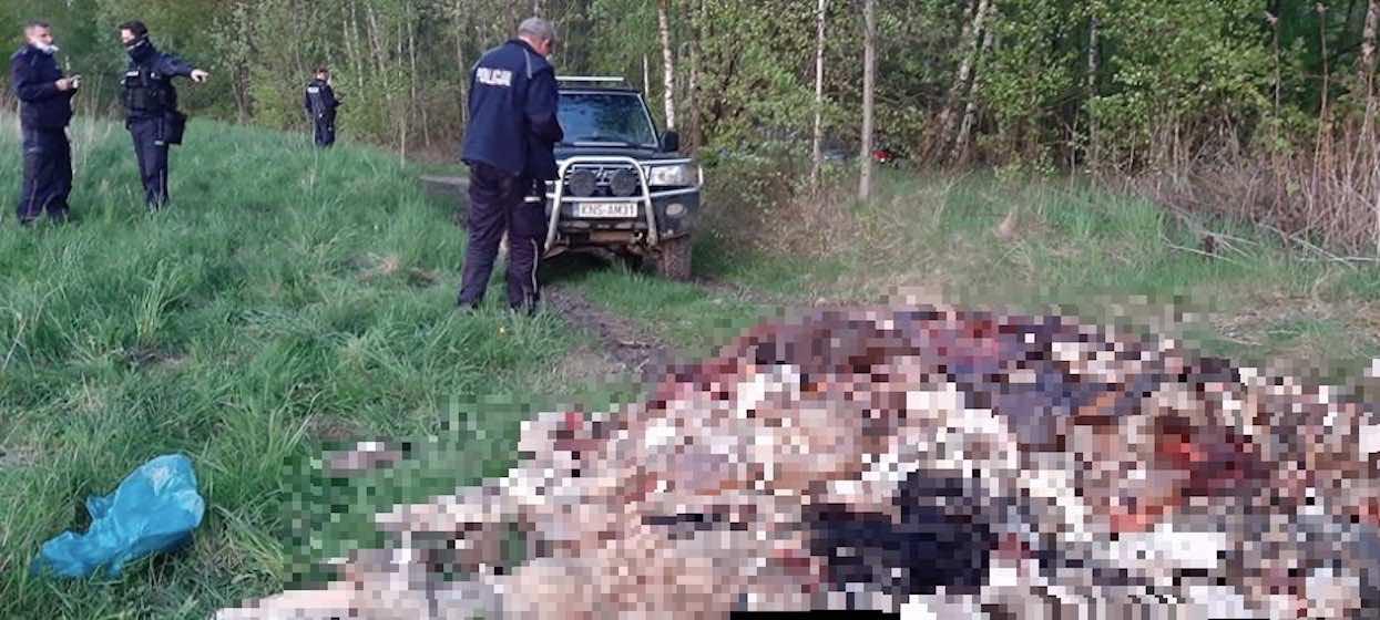 Sołtys zobaczył, co ktoś porzucił w lesie i pobladł. Podobnego widoku w życiu nie widział, jest zdruzgotany