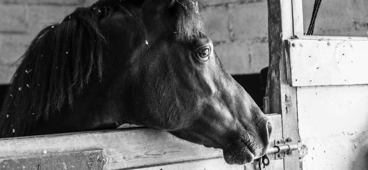 Skandaliczne warunki, ciężko powstrzymać łzy. Tragedia koni w Janowie Podlaskim