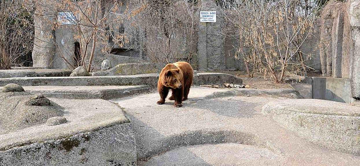 Nagle wtargnął do warszawskiego zoo, ciężko uwierzyć, co chciał zrobić niedźwiedziowi. Na miejscu szybko pojawiły się służby
