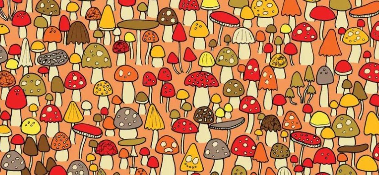 Wśród grzybów schowała się myszka, ale widzi ją tylko 1 na 12 osób. Wyzwanie dla najbystrzejszych