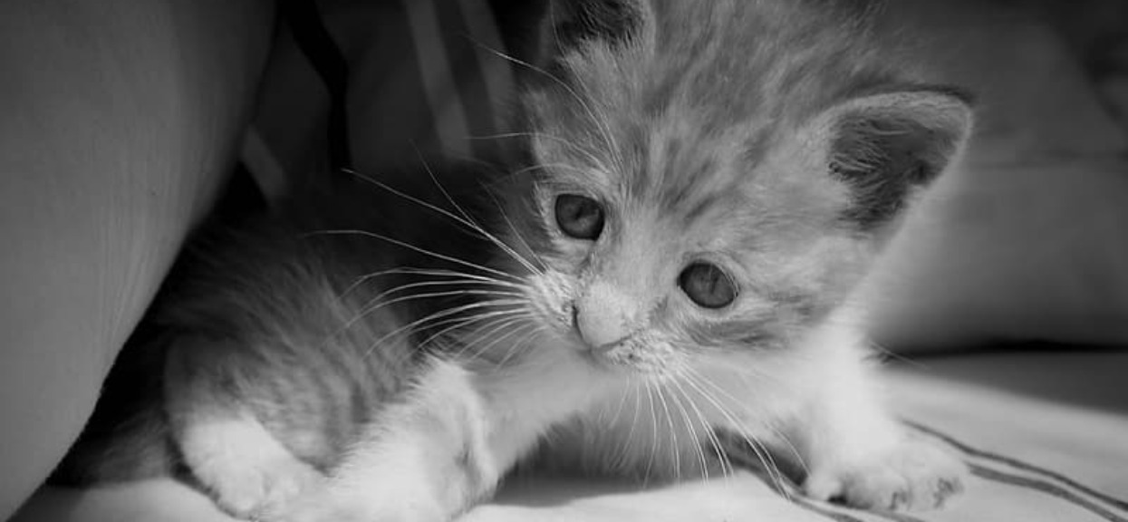 11-latek znęcał się nad kotem, filmik wrzucił do sieci. Teraz stanie przed sądem rodzinnym, jaka powinna być kara?