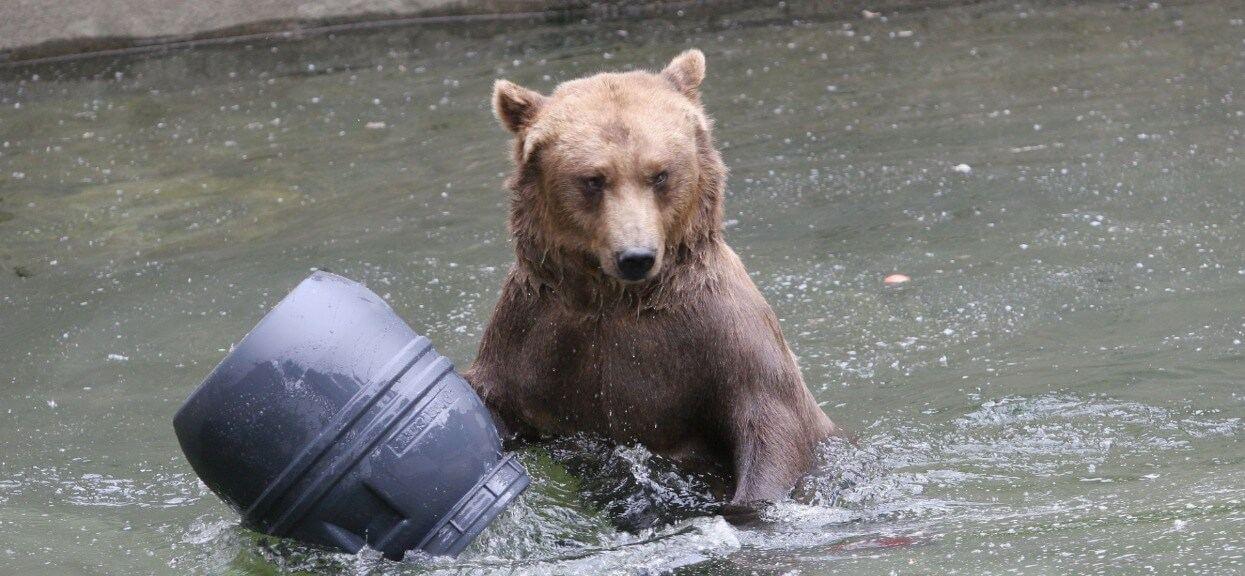 Dyrektor warszawskiego zoo zadecydował. Misie znikną z wybiegu przy alei Solidarności