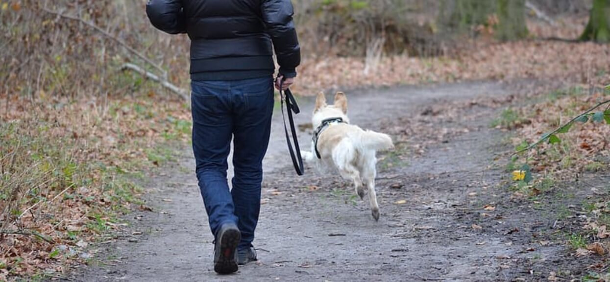 Wyszedł z psem na spacer, na drodze spotkali maleńkie zwierzę. Nie przewidział jego zachowania, musiał uciekać