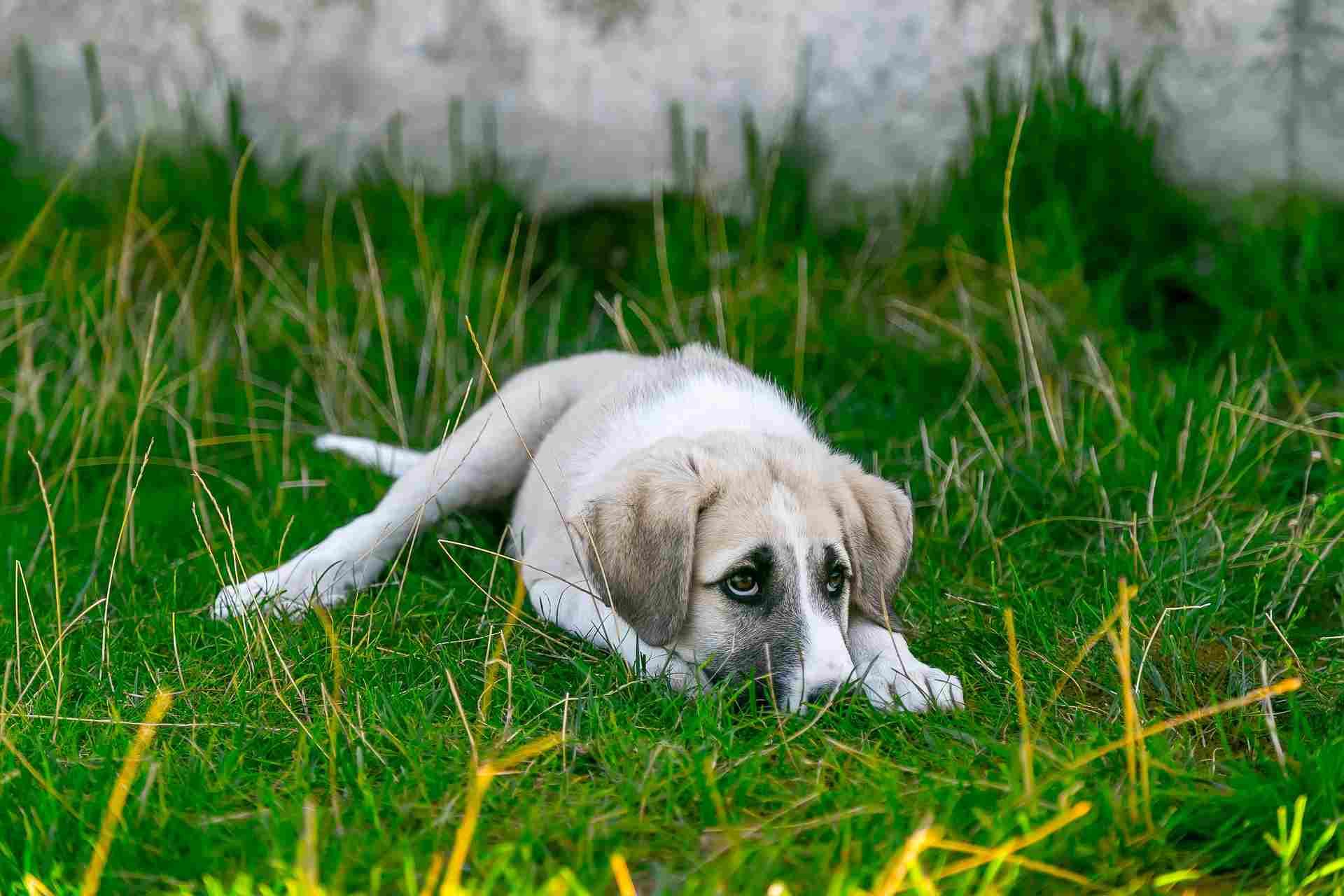 Pies to zwierzę, o którym krąż wiele mitów - obalamy 8 największych