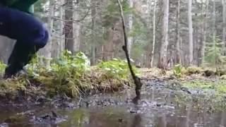 Mężczyzna włożył kij do leśnego błota. Niebywałe, co się stało potem, przecieramy oczy ze zdumienia