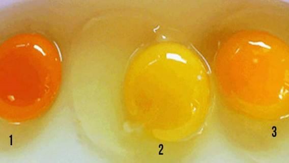 Jajka zdrowe żółtko