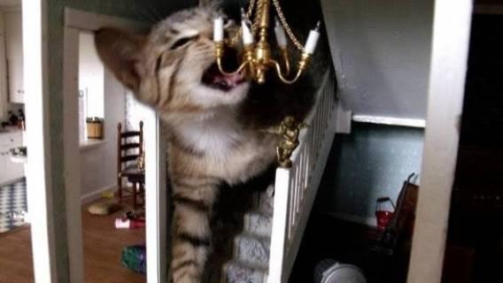 Kotek w domku dla lalek